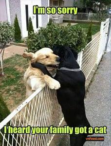 2 honden grappig