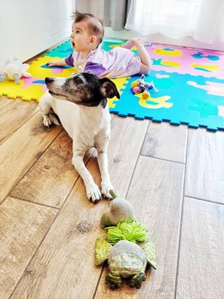 kindvriendelijk hond en baby