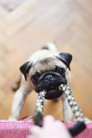 spelen met je hond / puppy