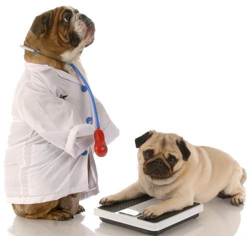 overgewicht bij honden