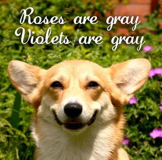 Grappige hond met rozen op achtergrond