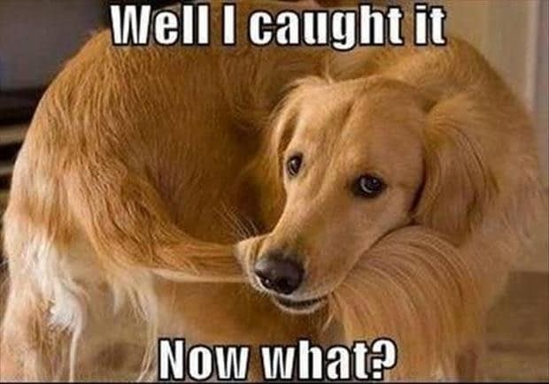 Staart najagen hond