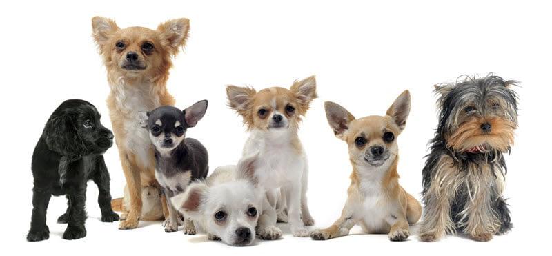 Vrijdag Grappige honden Plaatjes Dag