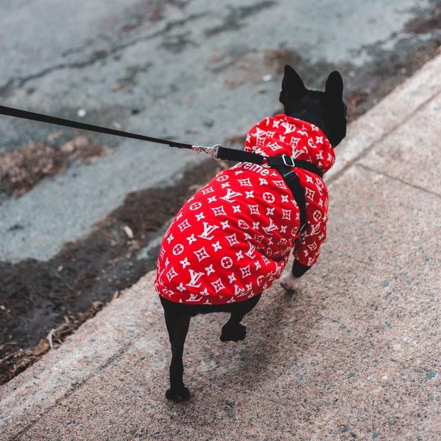 Waarom wil een hond zijn eigen staart achterna jagen?