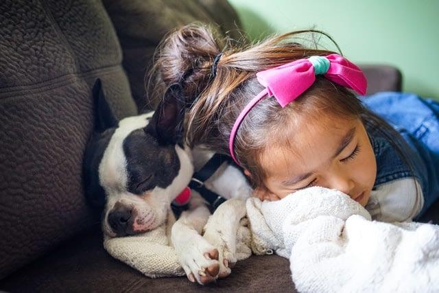 Hoe krijg je jouw hond rustig als er bezoek komt?