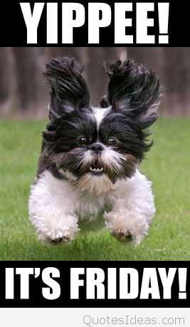 Puppy training. Hoe train je een Puppy?