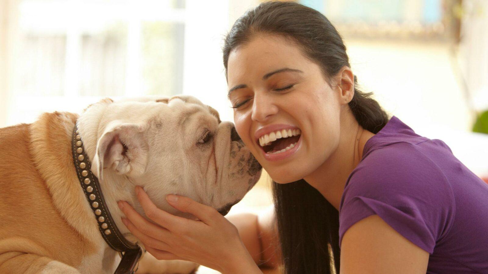 Pup Introduceren bij Andere Hond, Hoe doe je dat?